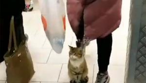 お店の入口に座ったまま絶対に絶対に絶対に絶対に動かない猫の動画が大人気