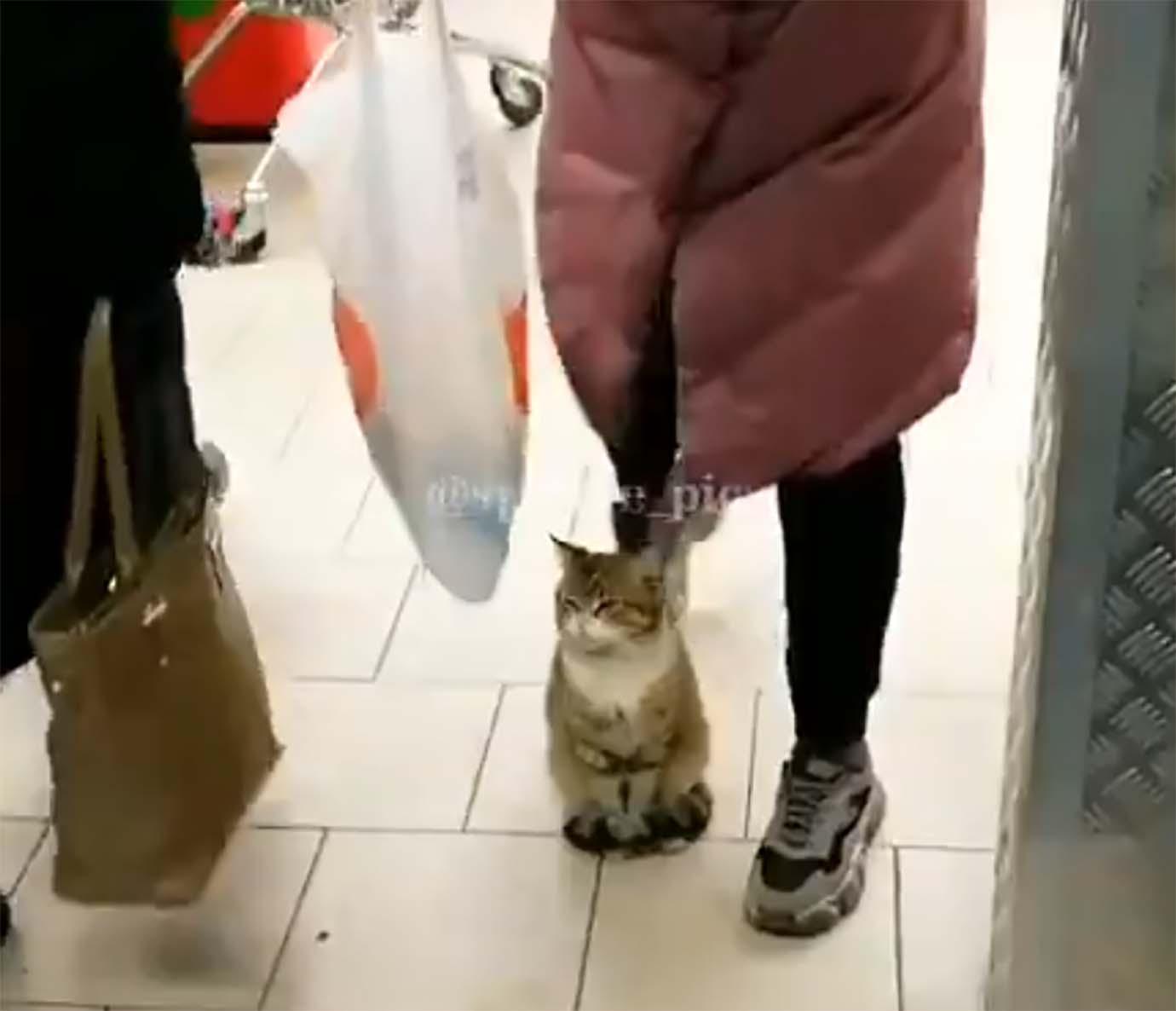 cat-not-move