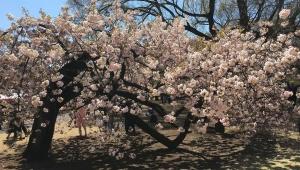 ゲームクリエイターとしてメガテンの生みの親・鈴木大司教が桜を見る会に参加 / 会場に召喚される