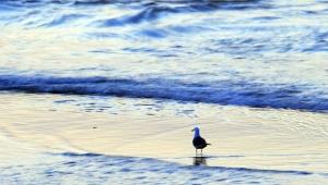 関東砿産が日本で廃水を不法投棄か / 隠蔽の可能性アリでFBIが調査中