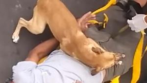 【感動】病院に運ばれる飼主に寄り添って泣き続ける犬 / 飼主の命の危険を悟ったか