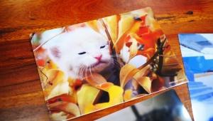 【話題】カフェベローチェでもらえる猫クリアファイルが可愛すぎるのだが