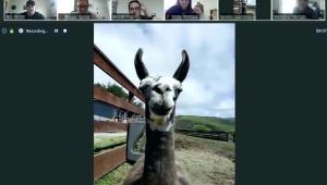 【話題】テレワークにヤギを呼ぶサービス開始 / 農場が開始したヤギ召喚サービスが大好評「1万円で呼べる」
