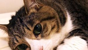 【話題】女性ひいて逃げた中川真理紗容疑者の猫ふーちゃんに同情の声「ふーちゃん心配」「ふーちゃんに罪はない」