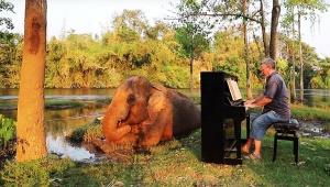【感動】ピアノで象を癒やすユーチューバーが大絶賛 / 助け出された像をも癒やす究極の演奏