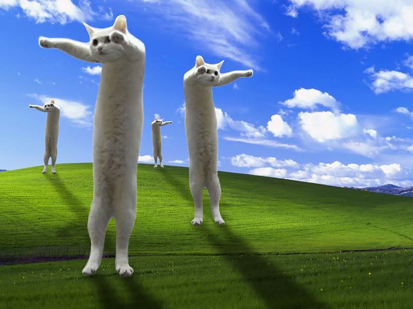 nobirutan-cats1