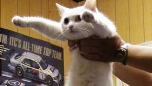 【話題】伝説の猫「のびーるたん」が死去 / 猫画像加工ブームの火付け役で人気ネコに