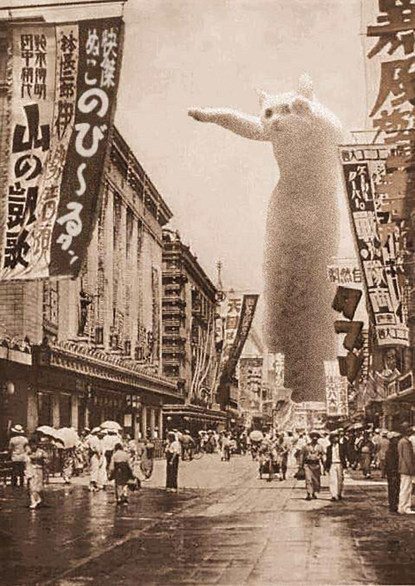 nobirutan-cats8