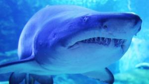 【衝撃】新型コロナウイルスワクチンのため鮫を50万匹殺す必要があることが判明
