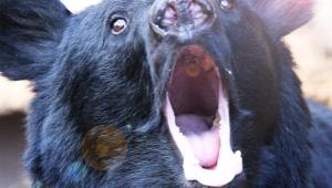 【衝撃動画】山梨県で釣りをしていたらクマに襲われた動画 / 執拗に追いかけてくる熊