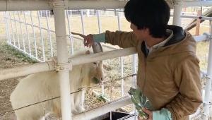 【衝撃動画】ユーチューバーが動物虐待か / ヤギにエサをやりながら叫んで突き落とす