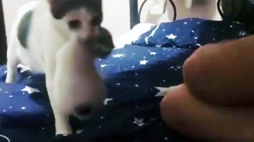 【衝撃動画】親猫が飼い主の前でとった行動に世界中が感動 / こんなことされたら抱きしめたくなる