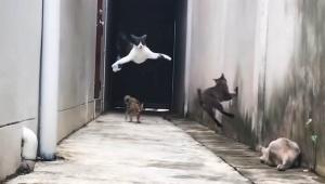 【衝撃動画】アクション映画のように華麗な動きの猫が激写される / マトリックス並みの素早さ