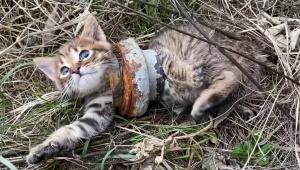 【話題】鉄パイプにハマってしまった子猫 / 人間に助けられる動画が注目