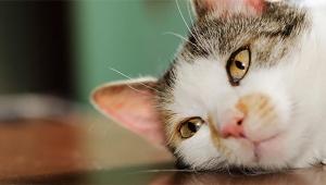 【絶対に見てほしい動画】猫島に行ったら猫と猫と猫と猫と猫がたくさん集まってきた動画がチョー萌えカワイイ