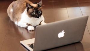 【衝撃動画】黒猫が魔法で炎を発生させる動画が世界的レベルで話題 / 猫の魔力が確認された希少な動画