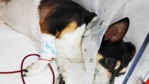 【話題】愛犬が癌で抗癌剤治療中に血液ストック不足に / 広く献血協力求める「大型犬をお飼いの献血にご協力いただける方」