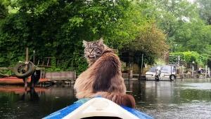 【癒やし動画】猫がボートに乗って延々と水場を突き進む動画が見ているだけで癒やされる