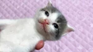 【癒やし動画】はじめて目薬をした子猫がかわいすぎると大絶賛 / つぶらな瞳がタマラナイ!