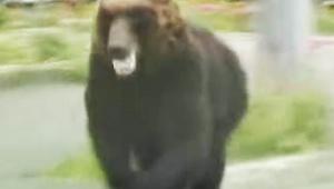 【緊急事態発生】札幌市にクマと全裸マンが同時出現で厳戒態勢 / クマ使いの能力者か「噛まれた人もいる」