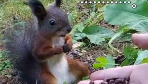 【癒やし動画】めっちゃ種食ったり! めっちゃ急に止まったり! 可愛すぎるリス動画が大絶賛