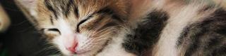 【衝撃】ムツゴロウさんが動物に飽きていた事が判明「動物愛ふーっとなくなった」