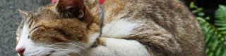【遠隔操作ウイルス事件】犯人がSDカード装着した猫亡くなる / 事件後に江の島の猫が激減「みんな誘拐されてしまった」